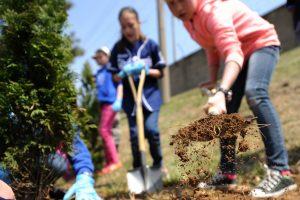 Piantare un albero per ogni cittadino italiano: la campagna delle Comunità Laudato si'
